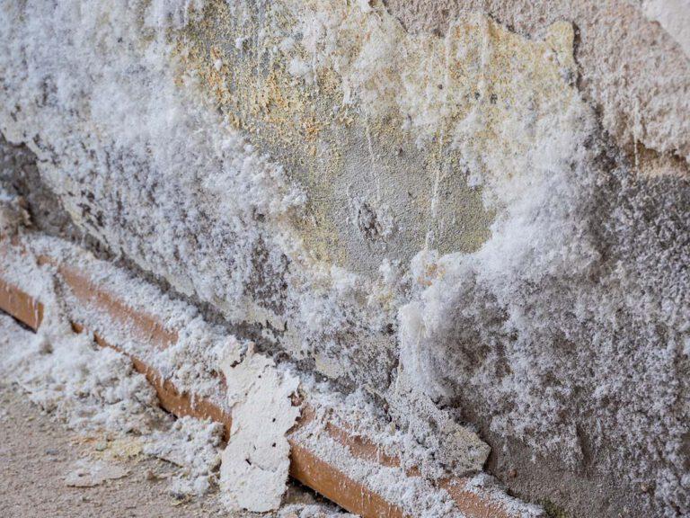Salpeter an einer Wand